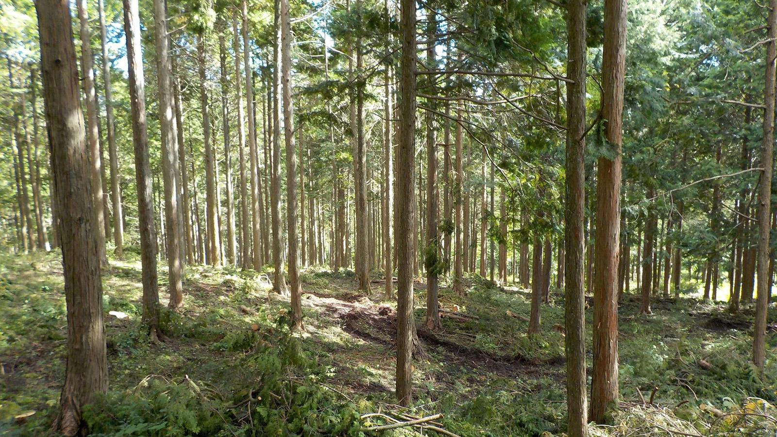 「紙の向こうに森が見える」間伐を促進するエコな取り組み